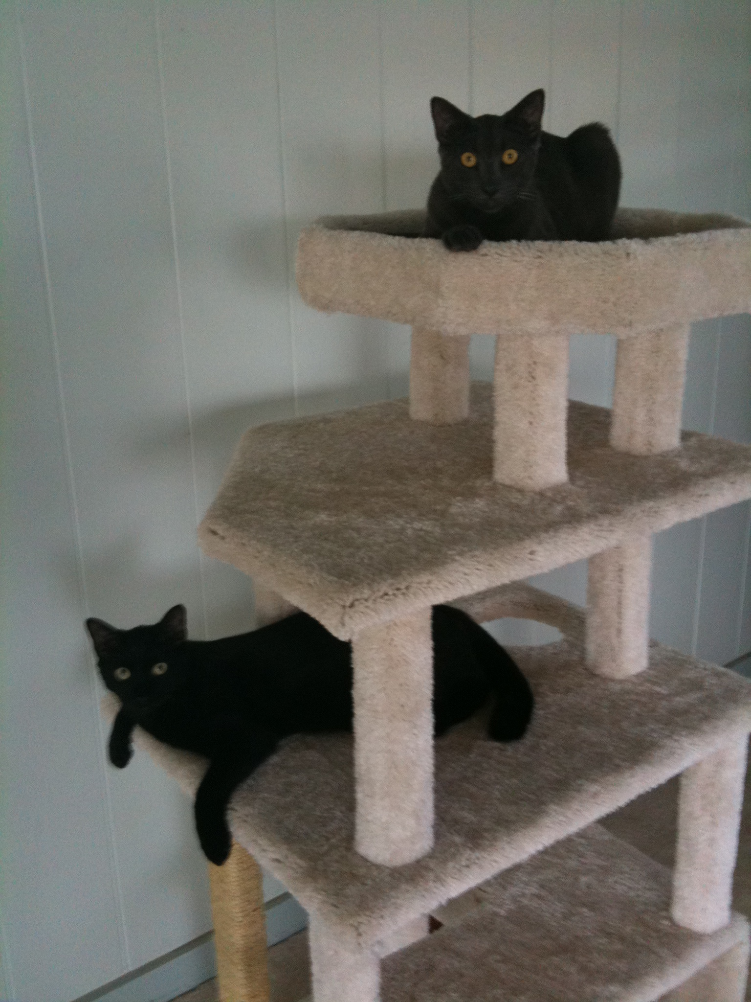 Free Diy Cat Tree Plans