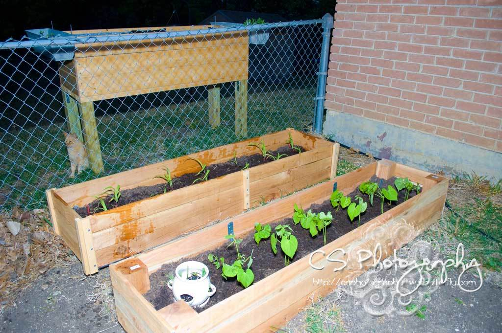 Diy Raised Garden Beds Related Keywords Suggestions
