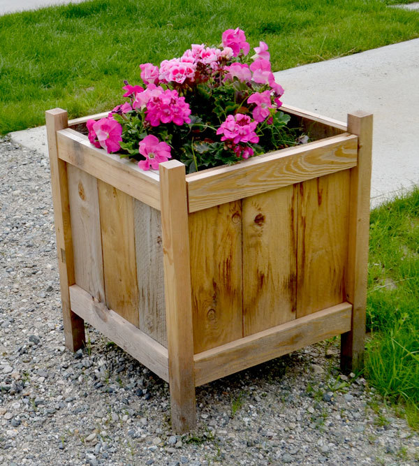 beautiful cedar planter about knee height, square block shaped with pink flowers