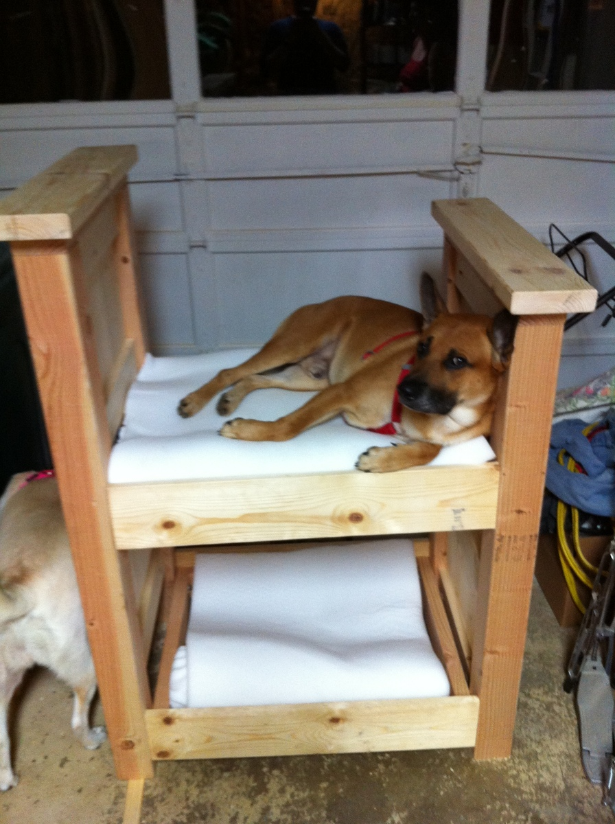 Doggy Bunk Bed