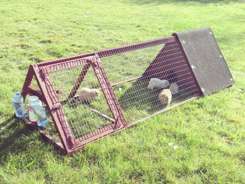 Ana white triangular rabbit hutch diy projects for A frame hut plans