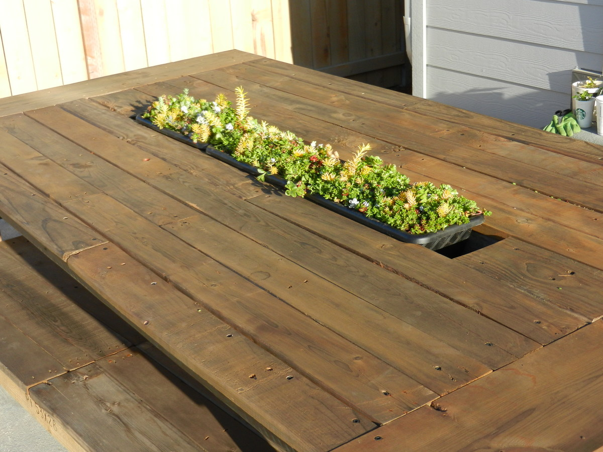 Found plastic planter boxes for succulents (3 in picture) @ dollar ...