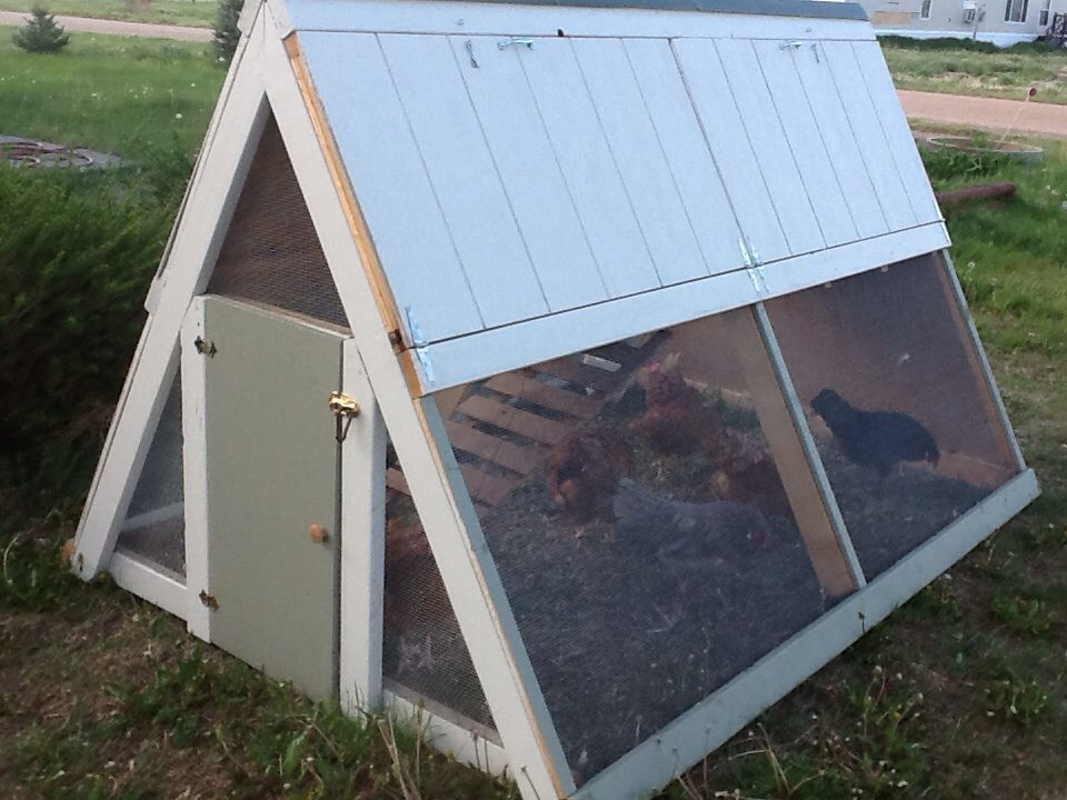 additional photos about this project i built this a frame chicken coop using the ana white plans
