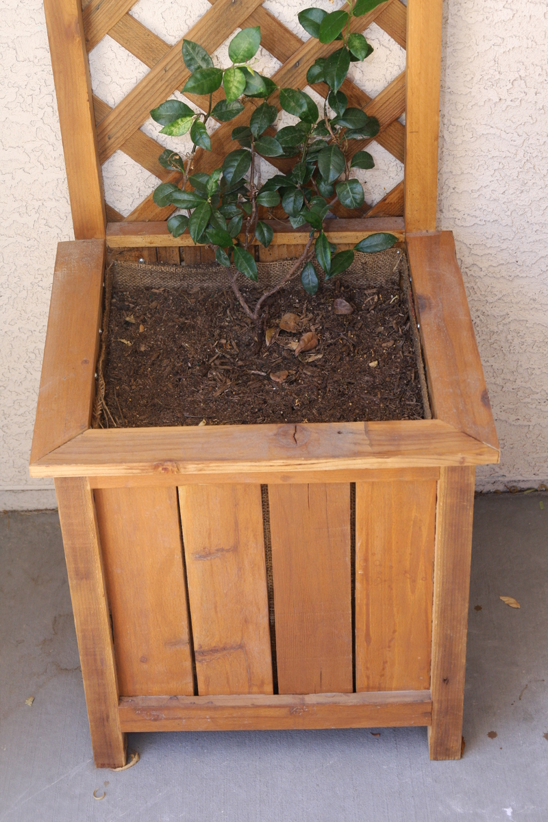 ana box trellis projects with white planter diy cedar