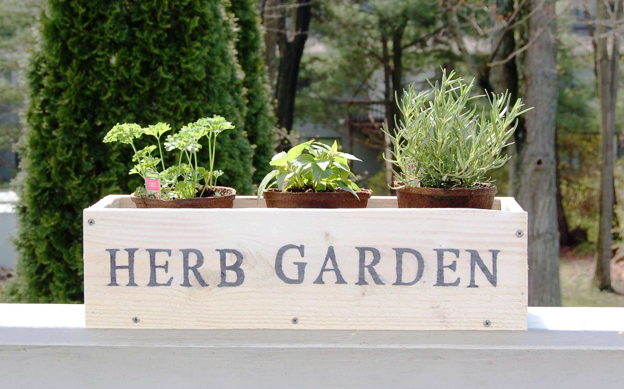 Inside herb garden herb garden ideas for small spaces for Herb garden ideas for small spaces