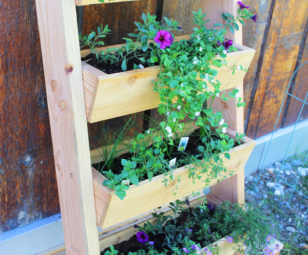 Close up view of the garden boxes with plants