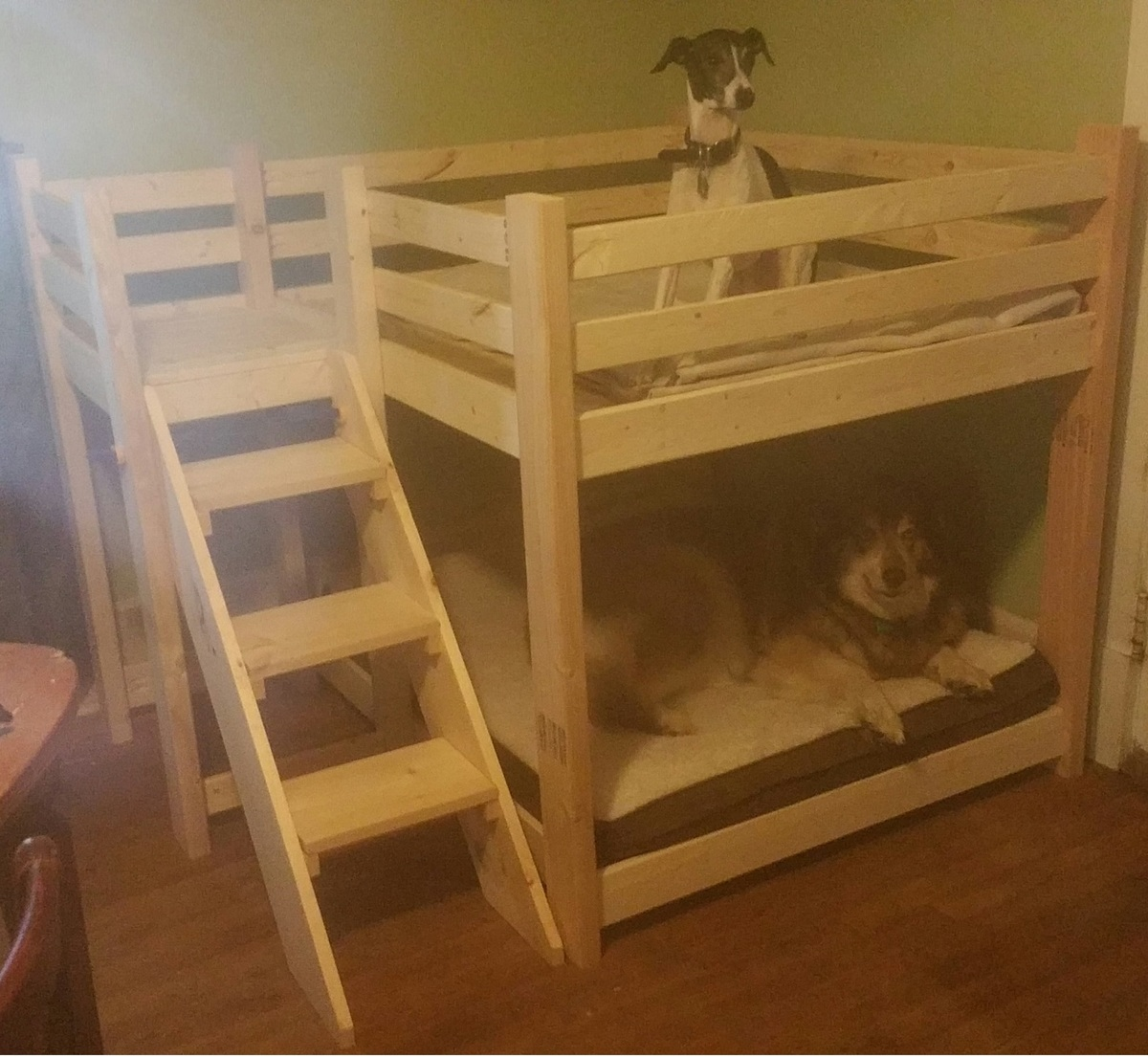 ana white dog bunk bed diy projects. Black Bedroom Furniture Sets. Home Design Ideas