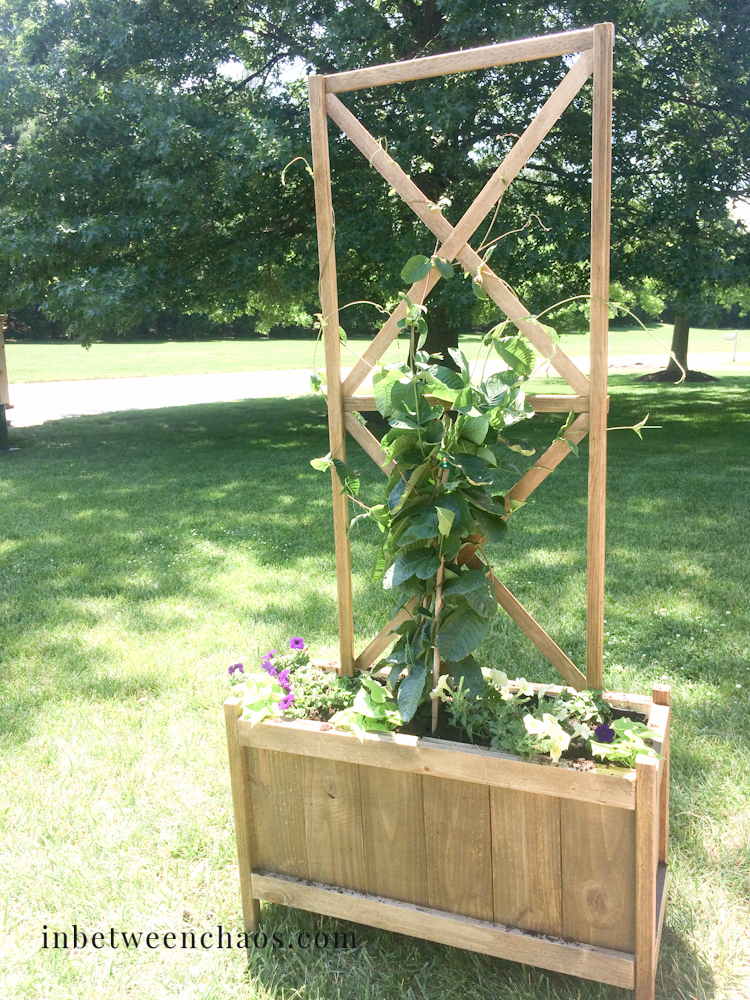 rectangle shaped cedar planter with trellis, doubled in width from the plans