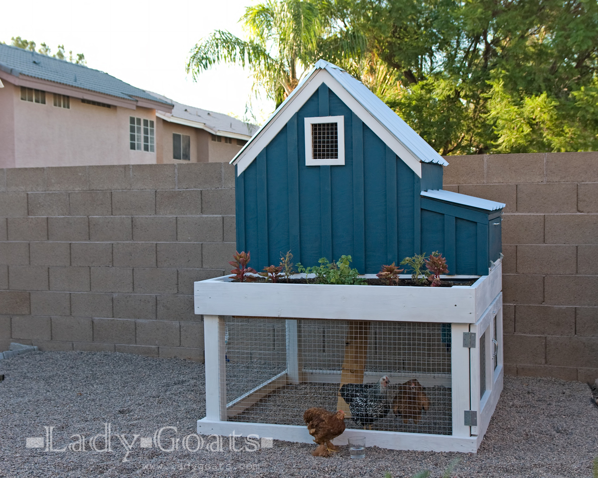 Ana white small chicken coop with planter clean out tray and nesting box diy projects Small chic house plans