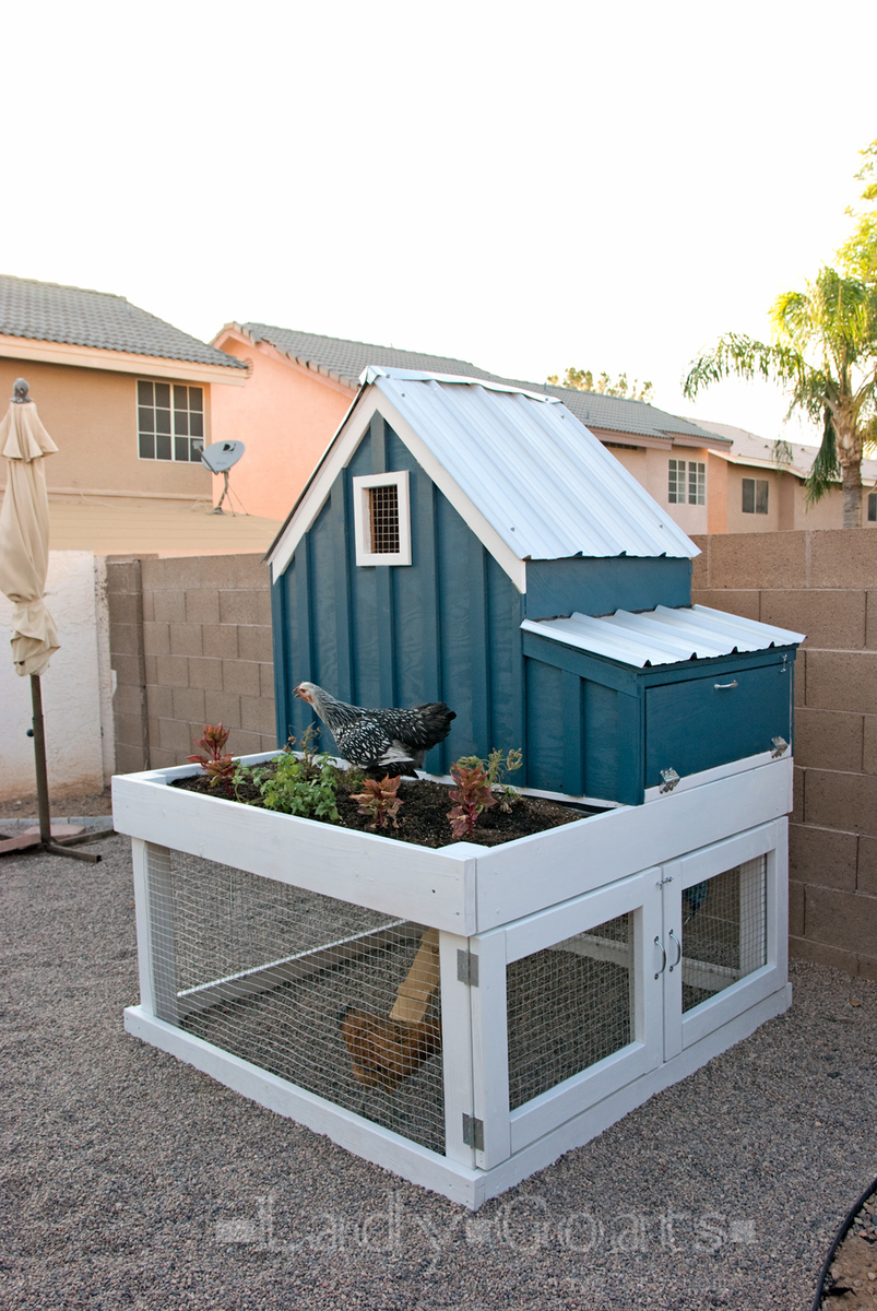 Ana white small chicken coop with planter clean out for Plans for chicken coops