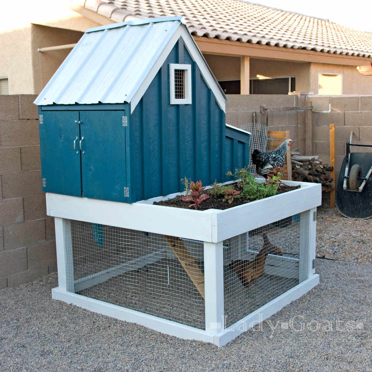 chicken coop teal with chickens