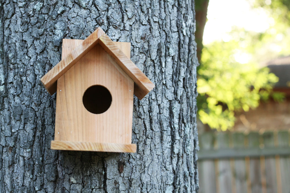 Build A Cedar Birdhouse For 2 Ana White