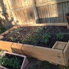 Counter Height Vegetable Garden : Ana White Counter Height Garden Boxes by Janet Fox - DIY Projects